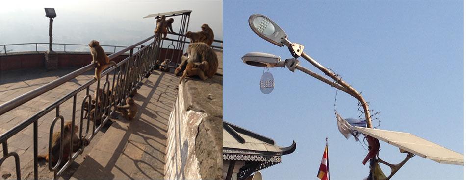 swayambhu5