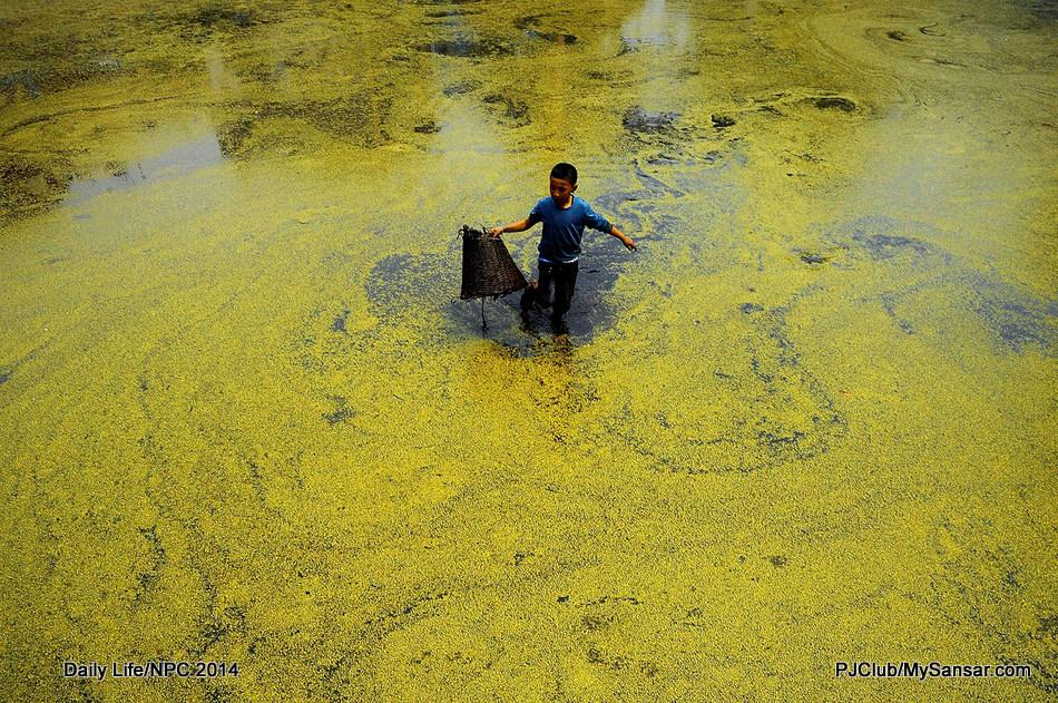 A young boy uses doko to catch fish in a moss laden Nag Pokhari in Kathmandu. Photo: Nimesh Jang Rai