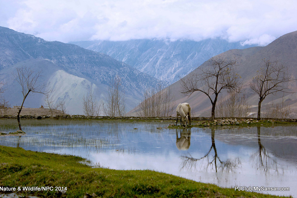 A wild horse grazes by a serene pool in the Mustang region of Nepal. Photo: Haishab  Kishor Shrestha