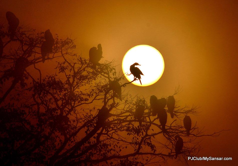 Birds take shelter atop a tree as the sun sets in Tau Daha. Photo: Bikram Rai