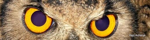 eye of owl_2