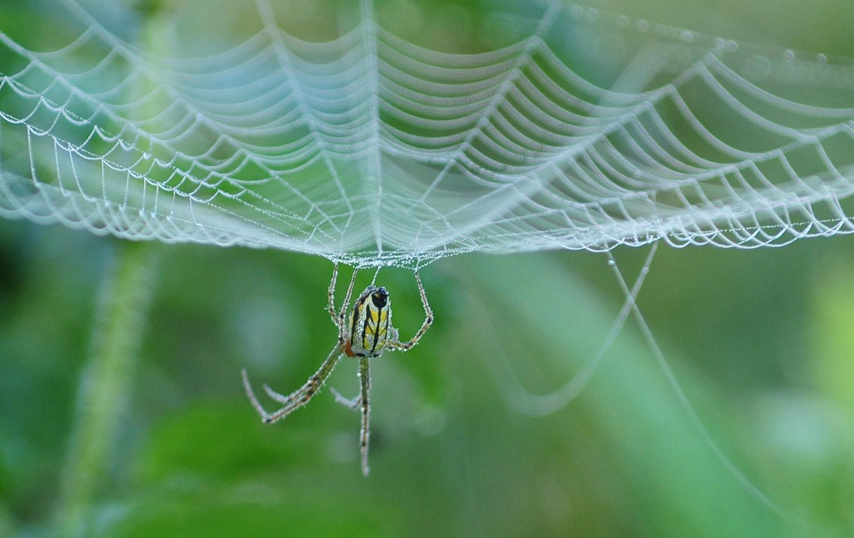 A spider weaves a trap. Photo: Bikash  Dware