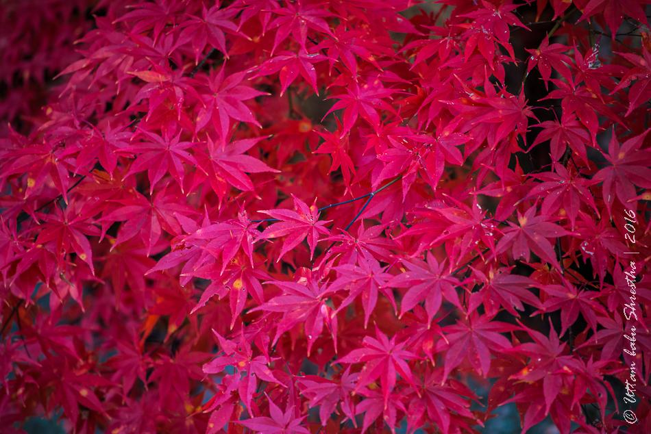 fall-colours-uttambabu-10