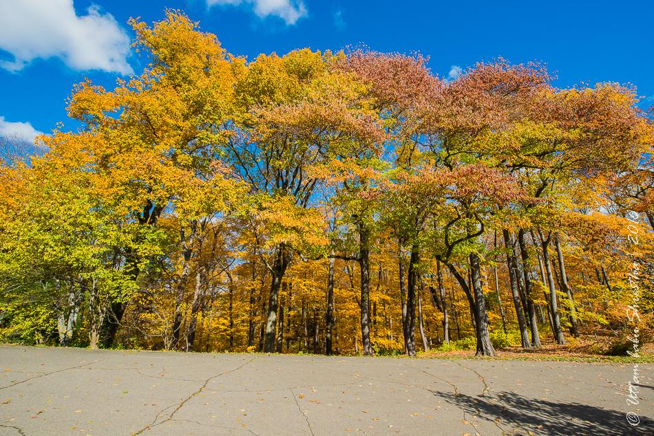 fall-colours-uttambabu-11