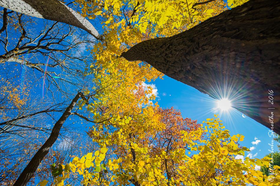 fall-colours-uttambabu-12