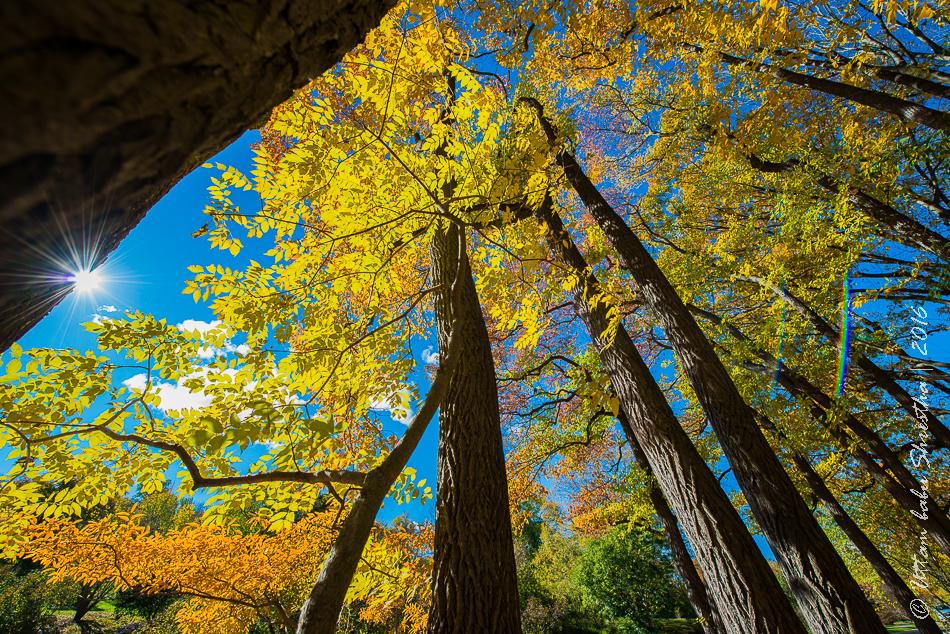 fall-colours-uttambabu-13
