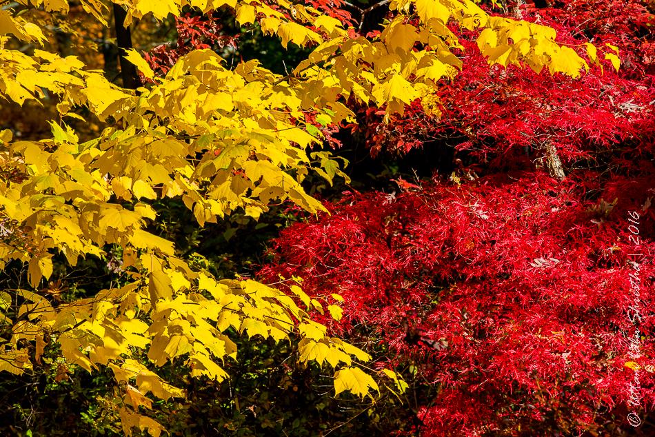 fall-colours-uttambabu-14