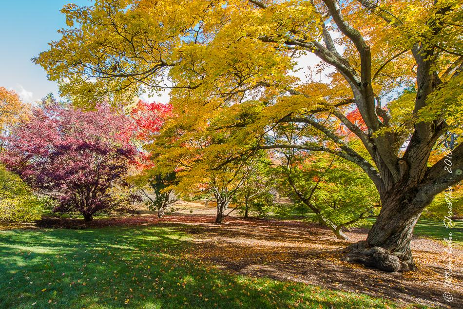 fall-colours-uttambabu-15
