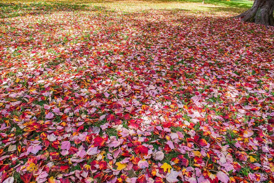 fall-colours-uttambabu-17