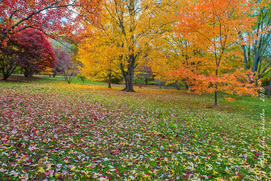 fall-colours-uttambabu-18