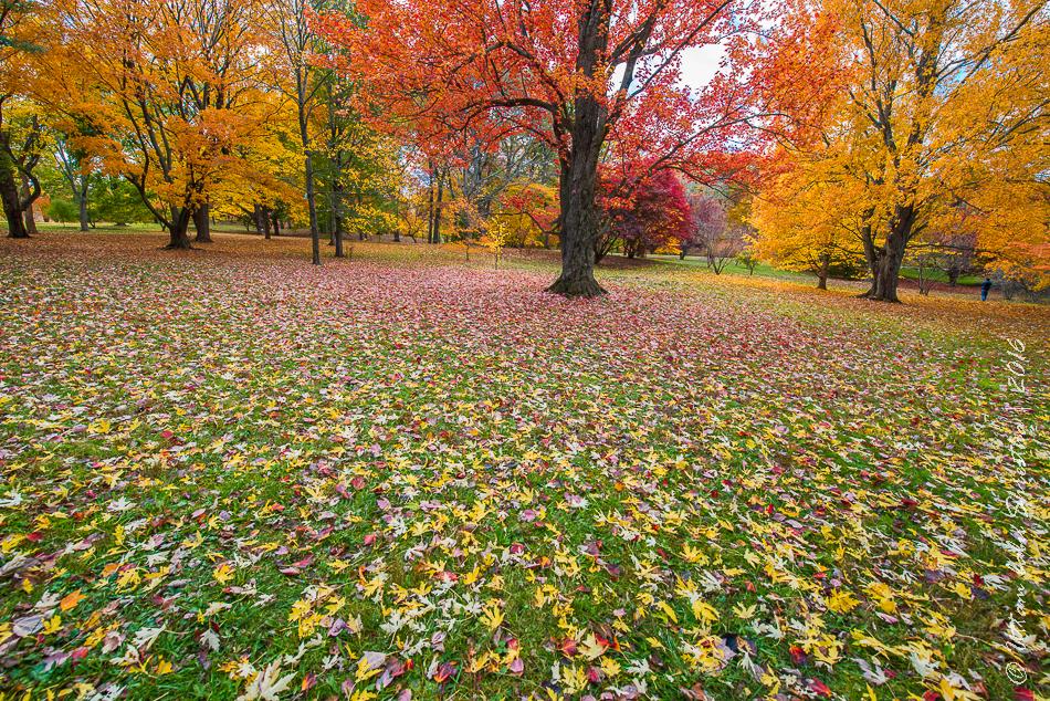fall-colours-uttambabu-19