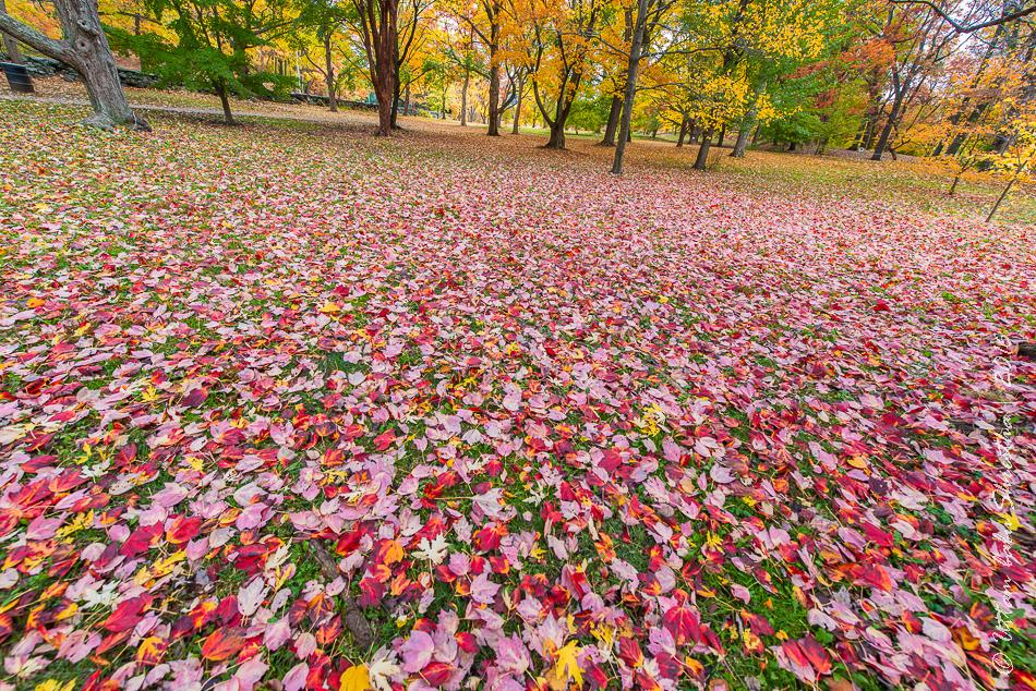 fall-colours-uttambabu-20