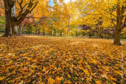 fall-colours-uttambabu-21