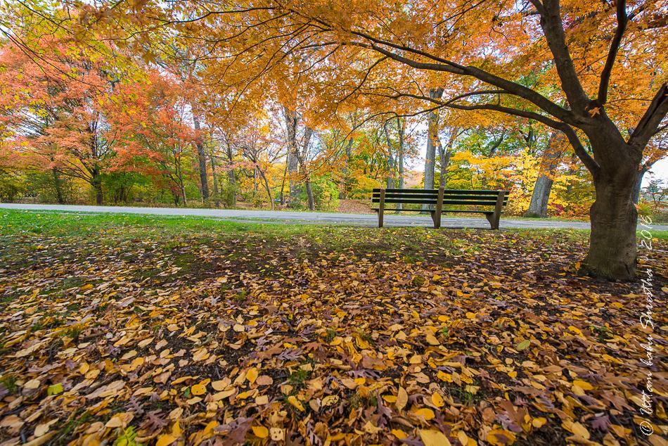fall-colours-uttambabu-22
