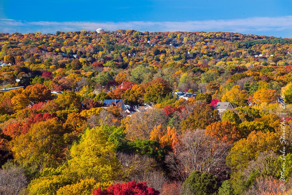 fall-colours-uttambabu-3